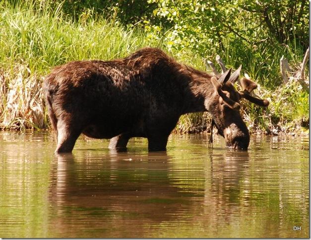 06-08-13 A Moose Wilson Road (43)a