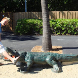 eaten by a crocodile in Miami, Florida, United States