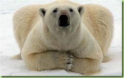 polar_1981879b