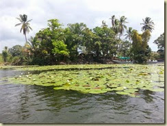 20140302_Islet Boat lilypads (Small)