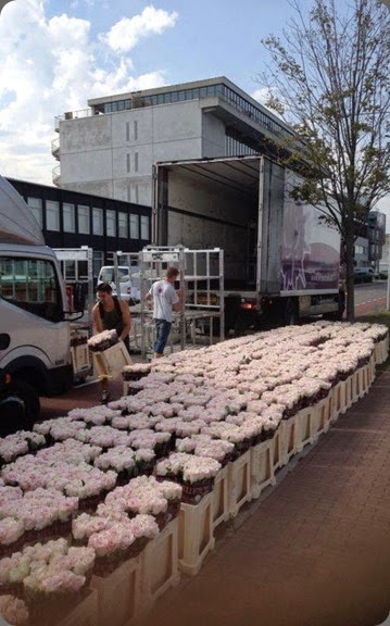 behind the scenes flower shipment  bouquetfleuriste.com b1150281_605484072808144_979839337_n