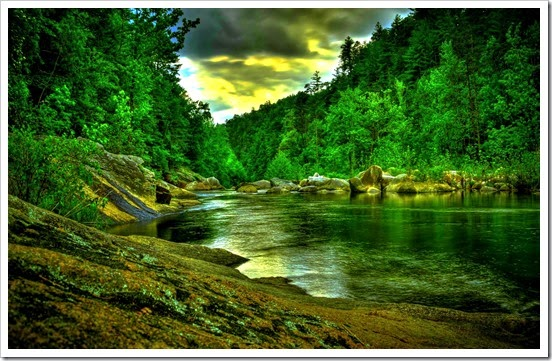 rainforest-river-48569