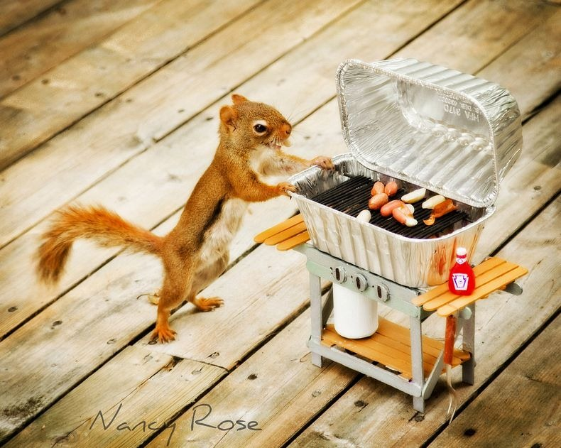 nancy-rose-squirrels-11