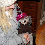 the new years doggy in Collingwood, Ontario, Canada