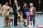 20130511-BMCN-Bullmastiff-Championship-Clubmatch-2602.jpg