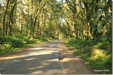 木漏れ日の中を行く自転車道