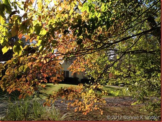 fall_2012 002