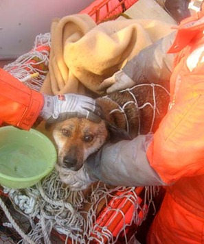 Japan Coast Guard members work to rescue the dog after its three week ordeal.