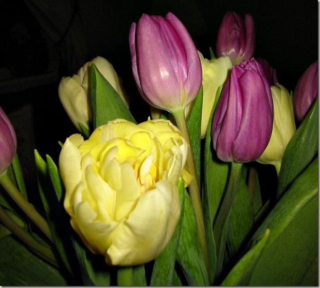 macro tulipbukett2