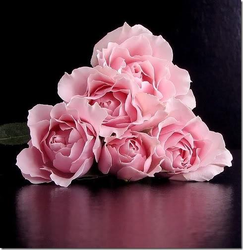 flor día del amor (9)