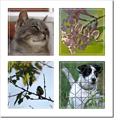 Collage4bilderhosAnki