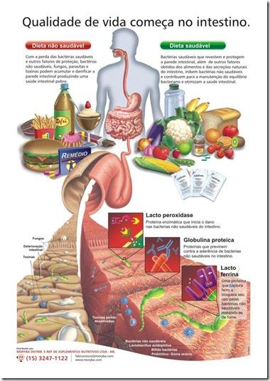 lactivos intestino saudável