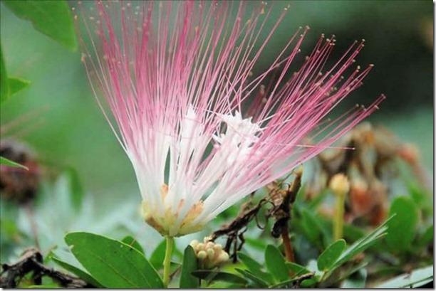 beautiful-amazon-rain-forest-4