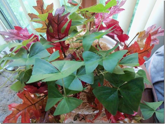 Autumn 2011 042