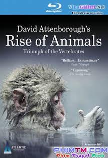 Sự Trỗi Dậy Của Động Vật - Rise of Animals: Triumph of the Vertebrates (2013)