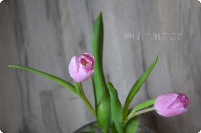 zartrosa Tulpen (02) am BlickDienstag