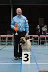 20130510-Bullmastiff-Worldcup-0390.jpg