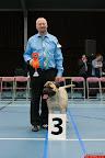 20130510-Bullmastiff-Worldcup-0390.jpg