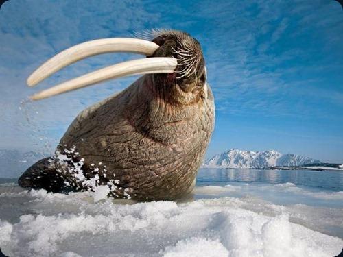Polar Obsession13