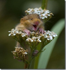 Hamster with flower