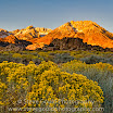 rabbitbush_sunrise  Steve Gould.jpg