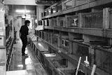 Shanghai - Marché poisson - Devant les bacs