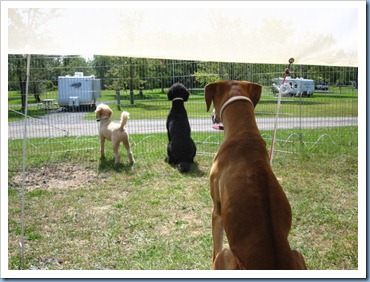 20110911_dogs_006