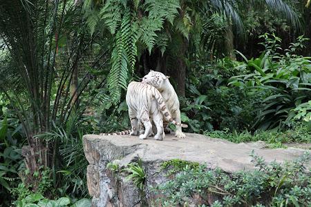 Photos of Singapore zoo
