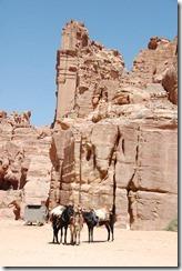 Oporrak 2011 - Jordania ,-  Petra, 21 de Septiembre  229