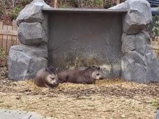 2014.04.21-063 tapirs