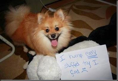 bad_dogs_publicly_shamed_640_40