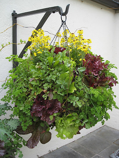 Now that's a hanging basket! And all edibles, too. Thank goodness there's such a sturdy hook!