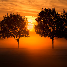 Morning Fog by Richard Bailey - Landscapes Weather ( clouds, foggy, trees, sunrise, morning )