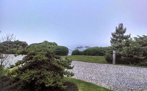 19. ocean fog 7-3-14