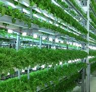 view of hydroponics