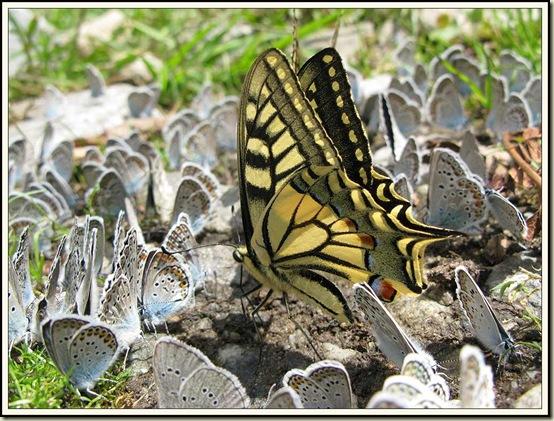 'Butterflyfest'