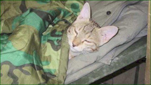 Сержант армии США привез из Афганистана кота