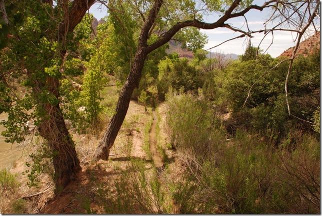 05-04-13 C Pa'Rus Trail Zion 030