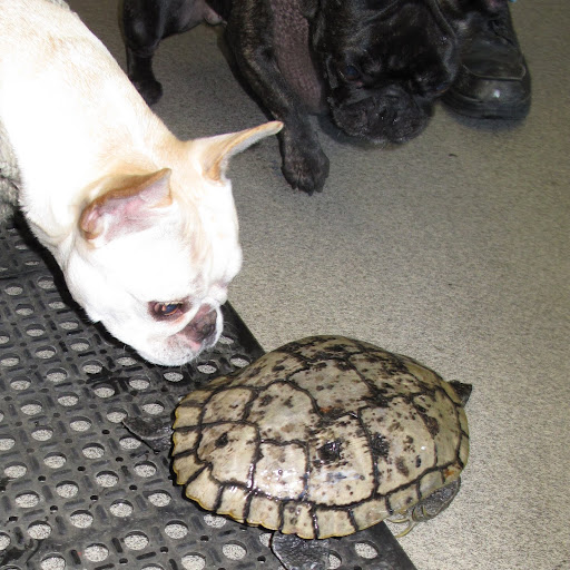 Hey turtle!  Do you want to play with us?  Where you rushing off to?