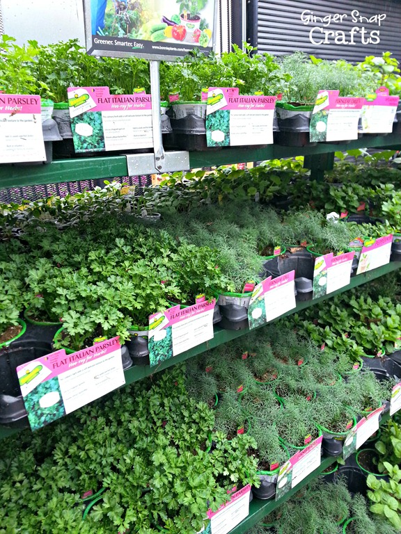 herbs at the Home Depot #digin