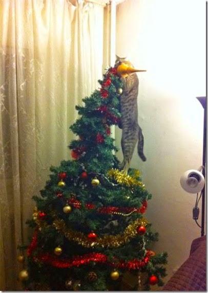 pets-hate-christmas-008