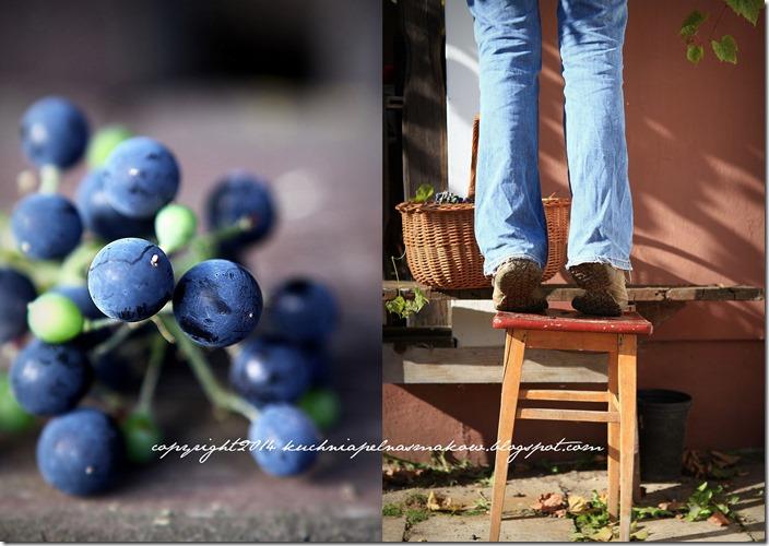 Lody winogronowe1