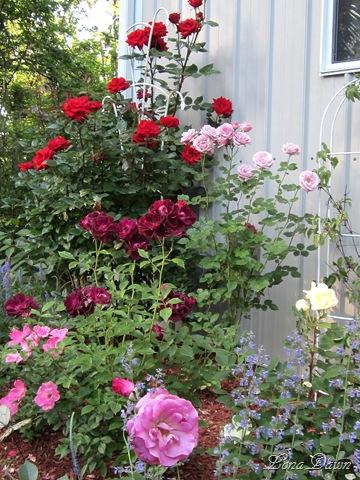 [Rose_Garden_May19%255B7%255D.jpg]