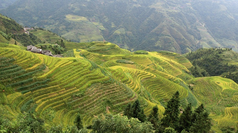 rice-terraces-12
