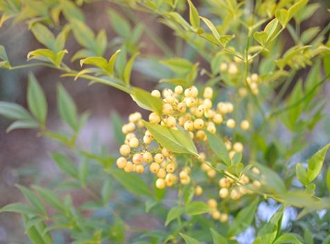 emerald in garden amy renea against white yellow