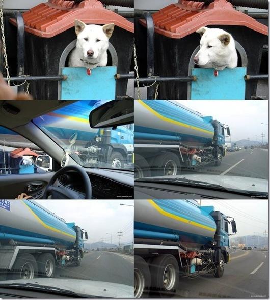 torak_dog