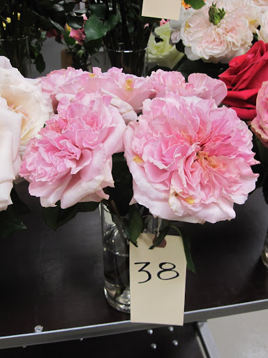 A rose that is not yet available in the store. You can see it on display today (Wednesday January 11, 2011) in the shop.