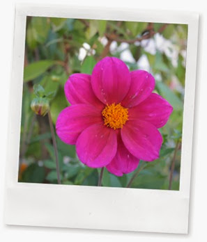 Total aus dem Zusammenhang gerissenes Blumenbild zur Deko