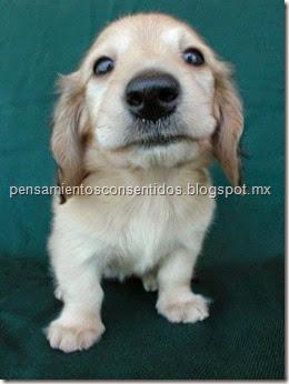 1220466074_puppies-78