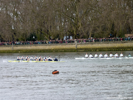 regata-oxford-cambridge-rio-tamesis-londres.JPG